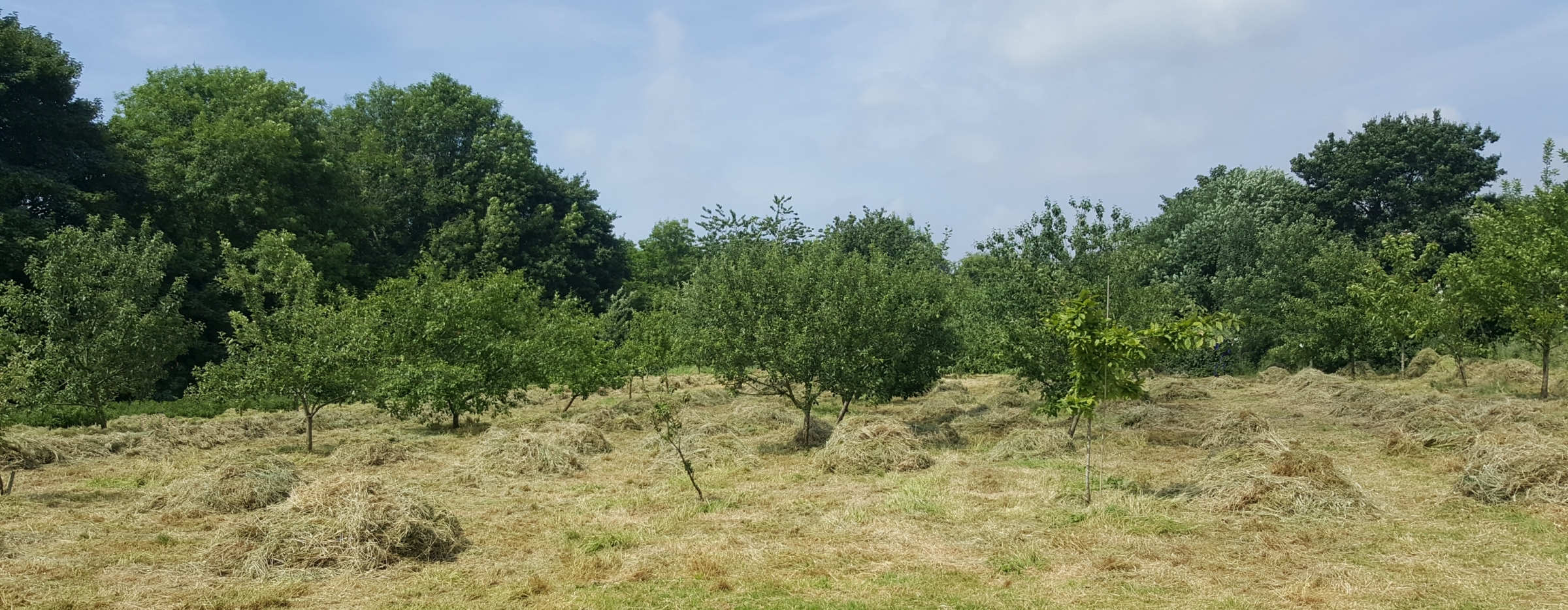 The orchard at Forest Farm